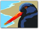 Click for more information on 4Th SAT-SUN | Coastal Trail Bird Walk.