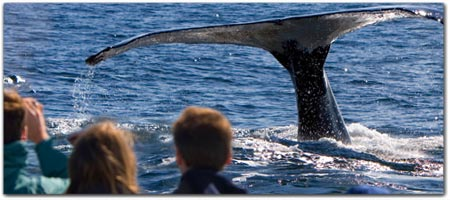 WHALE WATCHING FROM SHORE & UP-CLOSE