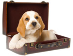 Click for more information on Places to Stay with your Dog.