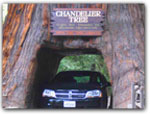 Click for more information on Drive Thru Tree.