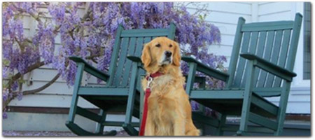 Click for more information on Pet friendly dining at Little River Inn.