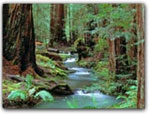 Click for more information on Montgomery Woods State Park.