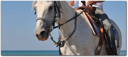 Click for more information on Ross Ranch - Horseback riding on the South Coast.