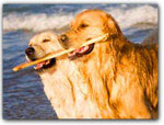 PET FRIENDLYMENDOCINO HOTELS