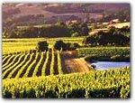 VISIT MENDOCINO WINE COUNTRY